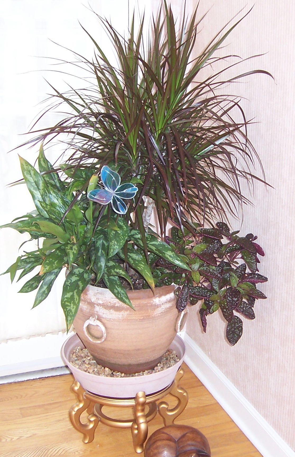 Indoor Plants1 #9F672D