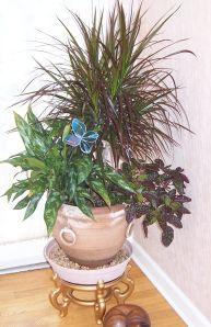 Indoor Plants1
