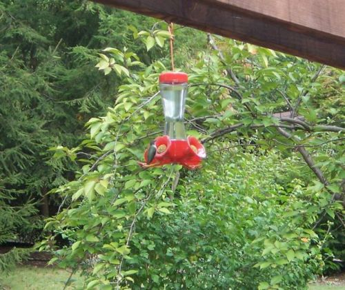hummmingbird2