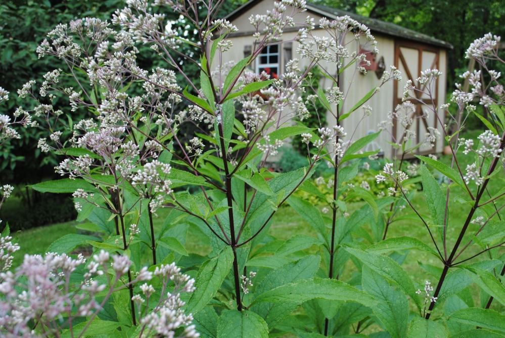 July Garden (4/5)