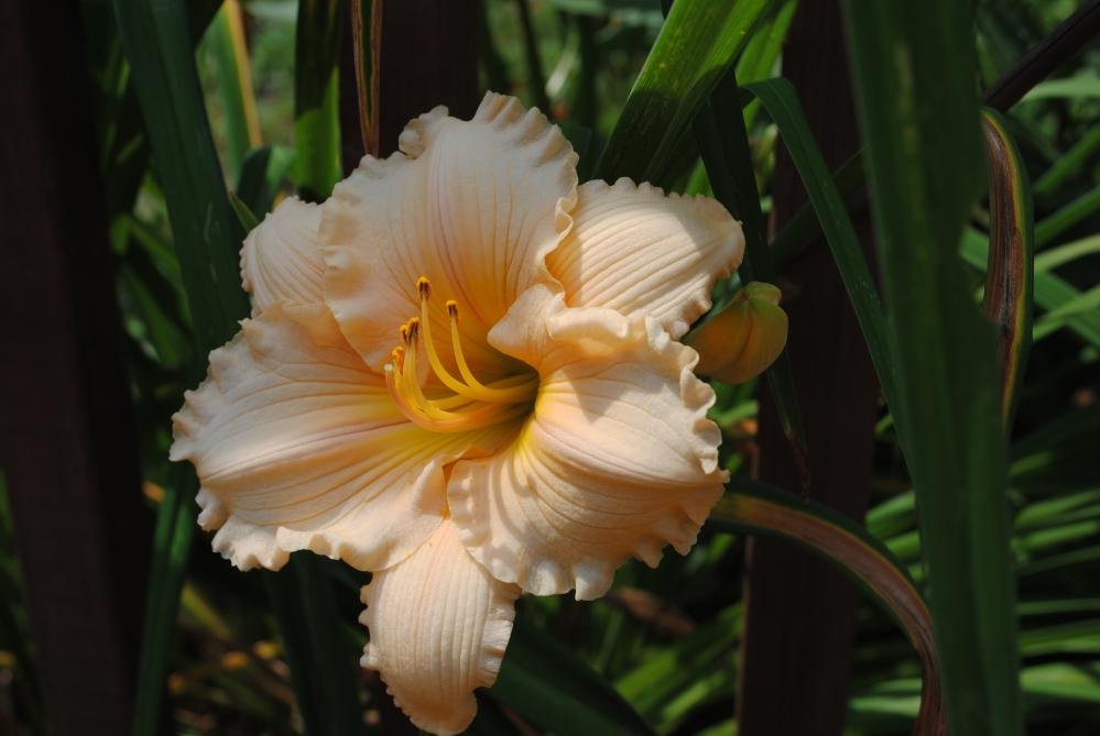 July Garden (5/5)