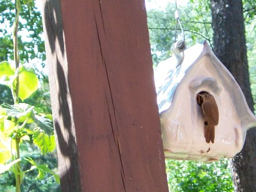House wren and her brood