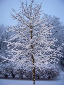 inter tree1